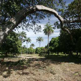 …Gambia- Vogel hotspot…